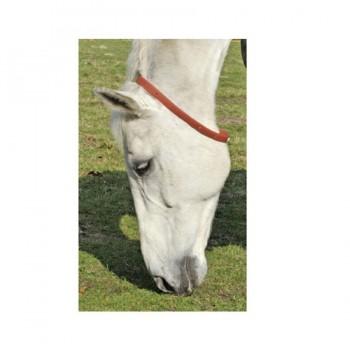 Collare per Cavalli Protezione contro gli Insetti